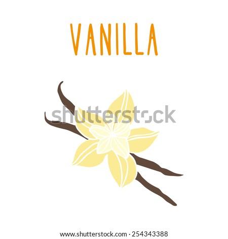 Vanilla beans. Vector EPS 10 hand drawn illustration.  - stock vector
