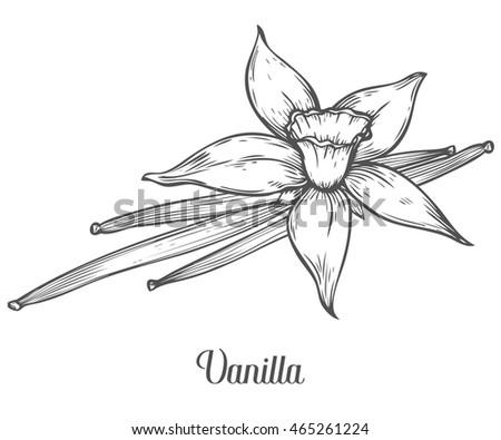 Vanilla Stock Images Royalty-Free Images U0026 Vectors | Shutterstock