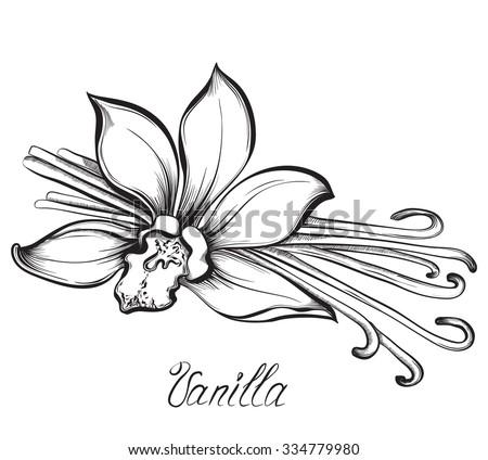 Set Kitchen Spices Vanilla Cinnamon Cloves Stock Vector 339984971 - Shutterstock
