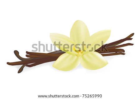 Vanilla Pods And Flower, Isolated On White Background, Vector Illustration - stock vector