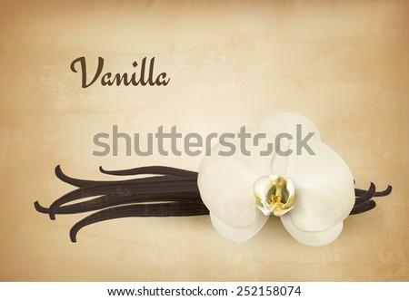 Vanilla retro background. Vector. - stock vector