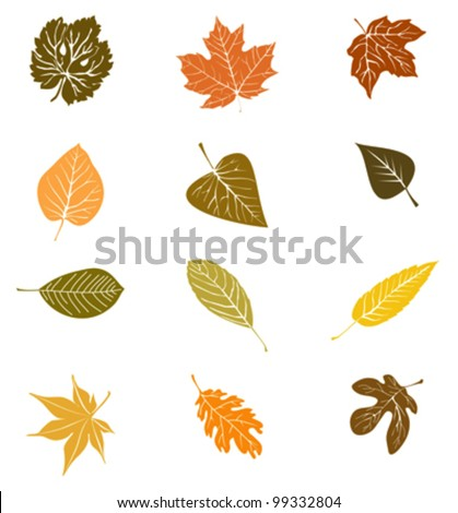 Various autumn leaves - stock vector