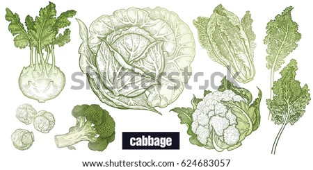 how to draw a cauliflower