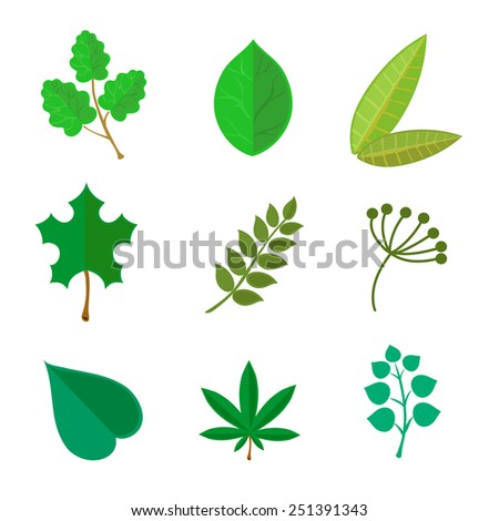 various green leaves set  isolated on white