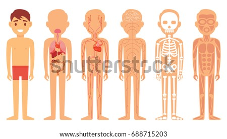 Various illustration systems human body diagram stock vector various illustration systems of a human body diagram on a white isolated background vector illustration ccuart Images
