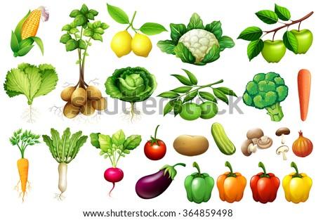 Various kind of vegetables illustration - stock vector