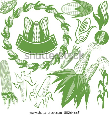 corn stalk stock images royaltyfree images amp vectors