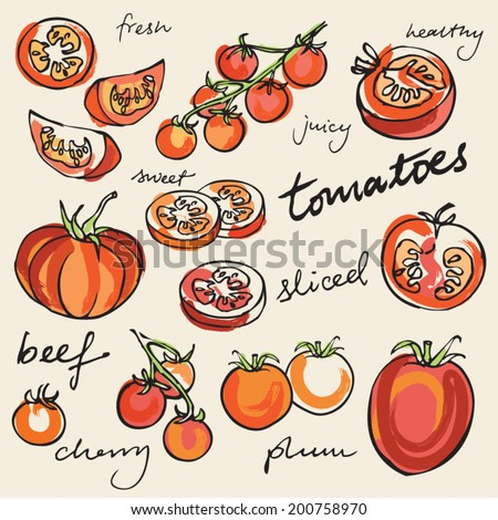 Various tomatoes vector illustration - stock vector