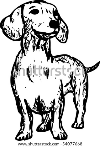 vector -  a dachshund isolated on background - stock vector