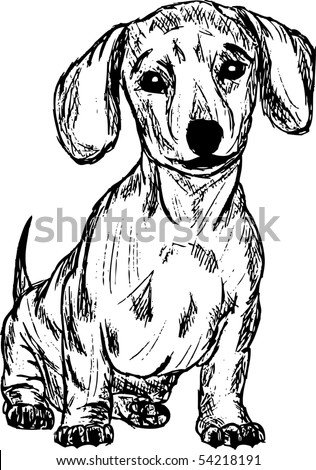 vector -  a dachshund isolated on background