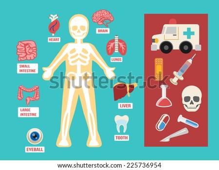 Vector anatomy flat color icon set - stock vector