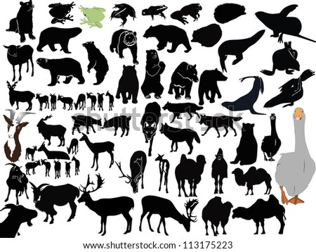 vector animals collection isolated on white background