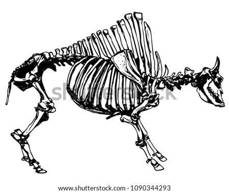 Vector Antique Bison Skeleton Bones Extinct Stock Vector Royalty