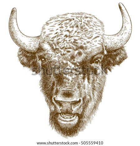 Buffalo face drawing