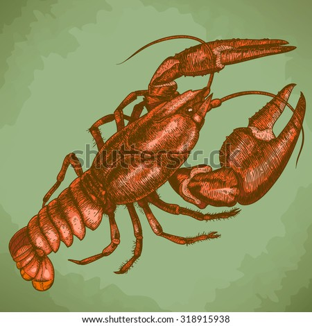 Vector antique engraving woodcut illustration of one crayfish in retro style - stock vector
