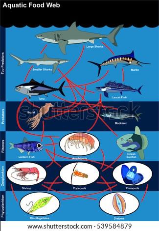 Vector Aquatic Food Web Lives Oceans Stock Vector Hd Royalty Free