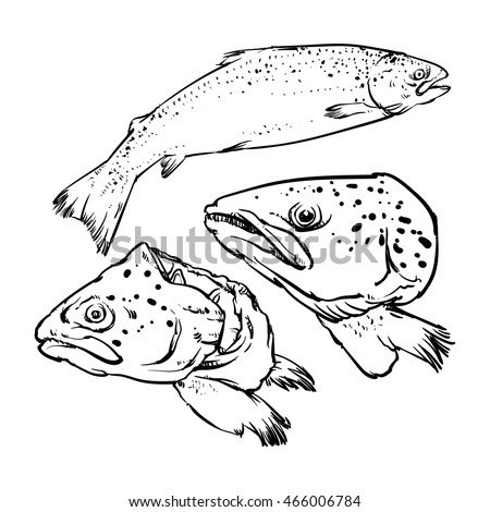 Vector atlantic salmon isolated on a white background. Hand Draw Salmon outline vector illustration.