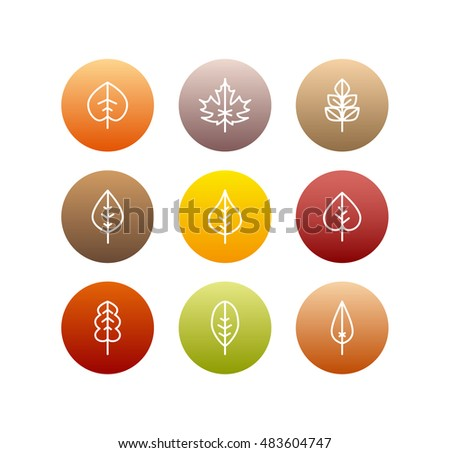 Vector autumn leaves icons set, fall tree colorful foliage