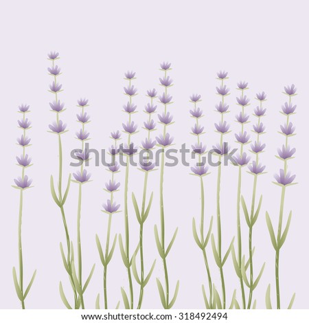 Vector background. Lavender on purple background. Eps 10.