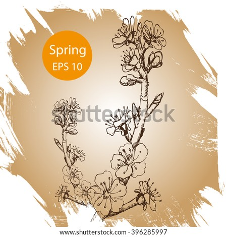 Vector background sketch flowering tree apricot, cherry, Apple, Sakura.