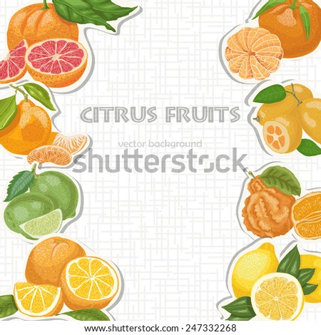Vector background with citrus fruits. Vector illustration for your design - stock vector