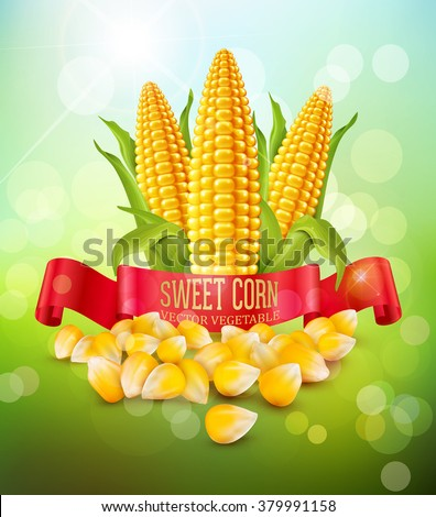 vector background with grains and cobs of corn and red ribbon - stock vector