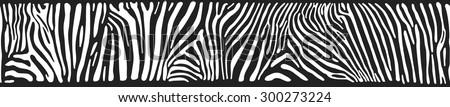 Vector background with zebra skin - stock vector