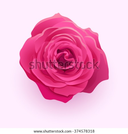 Vector beautiful flower deep pink rose isolated on white backgro - stock vector