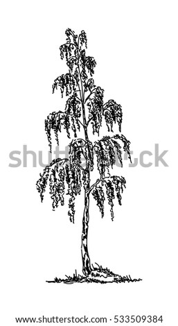 vector -birch tree isolated on background