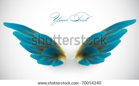 vector bird wing illustration - stock vector