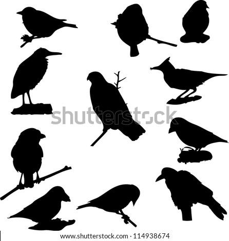 vector birds silhouette - stock vector
