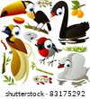vector birds: toucan, black swan, white swan, robin, bird of paradise - stock vector