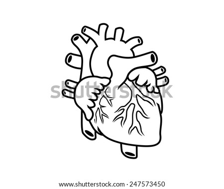 Human Heart Vector Black And White Vector Black And White Outline