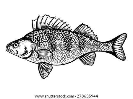 Vector Black and White Perch Fish Illustration