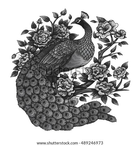 Vector Black And White Vintage Peacock Roses Illustration