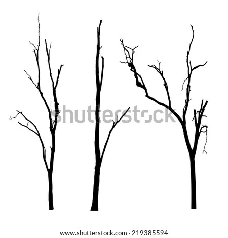 Vector Black Silhouette Bare Tree 248953183 likewise Vector Black Silhouette Bare Tree 218733958 likewise Shade Tree additionally 7320 also How Much Sun Does Your Garden Have. on winter shade plants