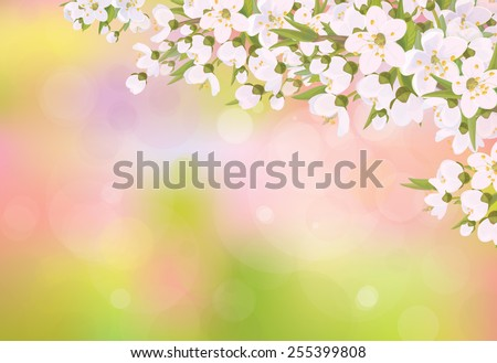 Vector blossoming branches of cherry tree, spring background. - stock vector