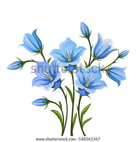 Bluebells Stock Images Royalty Free Images Amp Vectors
