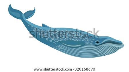 Vector blue whale isolated on white background