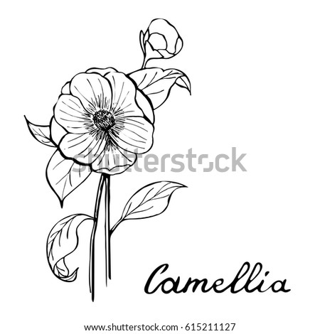 Camellia Flower Black White
