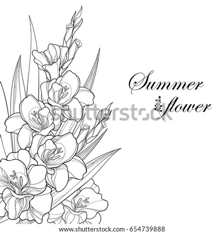 vector bouquet with gladiolus or sword lily flower bud and leaf in black isolated on