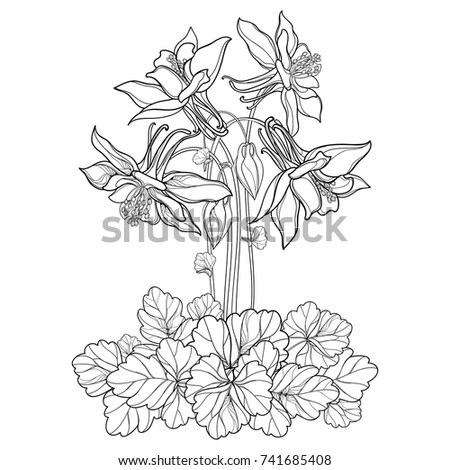 Columbine Stock Images Royalty Free Images Amp Vectors