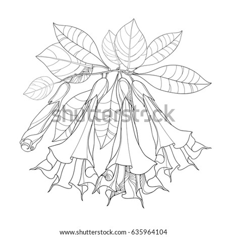 how to draw bougainvillea flower