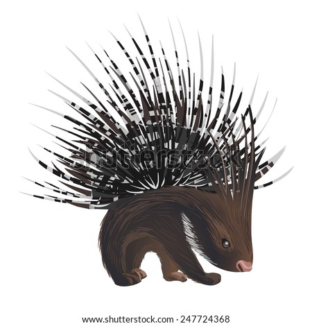 vector bristling porcupine on white background - stock vector