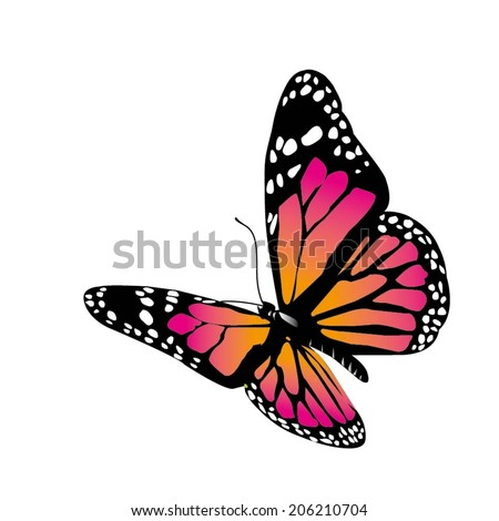 vector butterfly of orange color