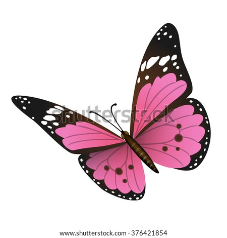 Vector butterfly on white background