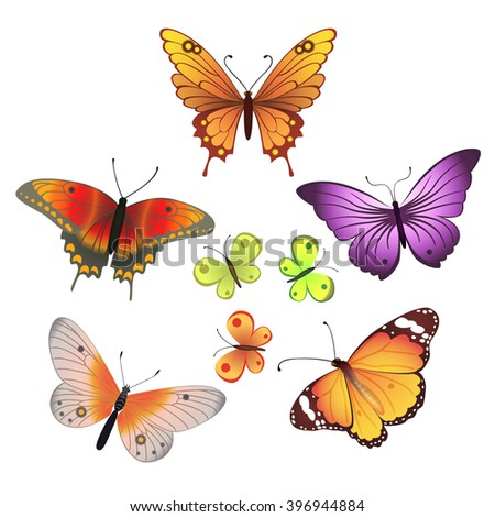 Vector butterfly set on white background - stock vector