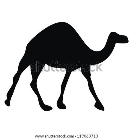 Vector - Camel - stock vector