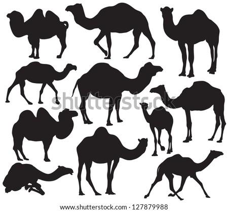 Vector camel silhouette - stock vector
