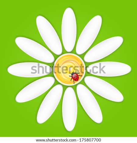 Vector Camomile and ladybird - stock vector